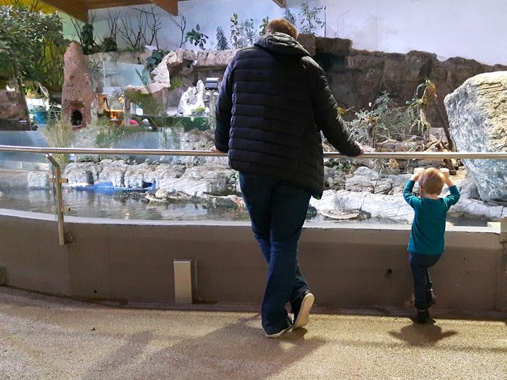 Unterwegs mit Kind im Zoo Schmiding