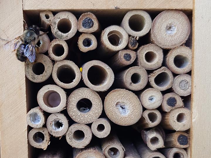 Unser Garten - Bienen willkommen!